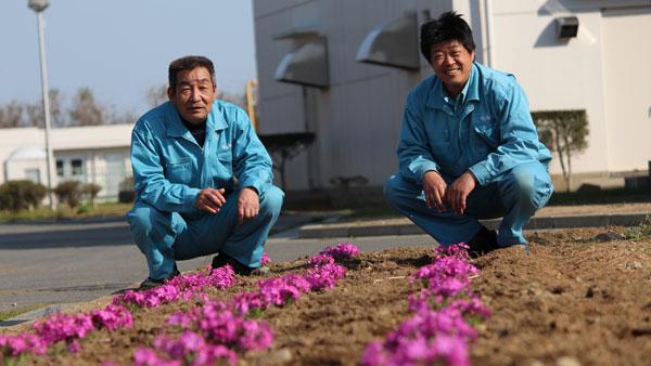 2014年春シバザクラの花が咲き始めていました